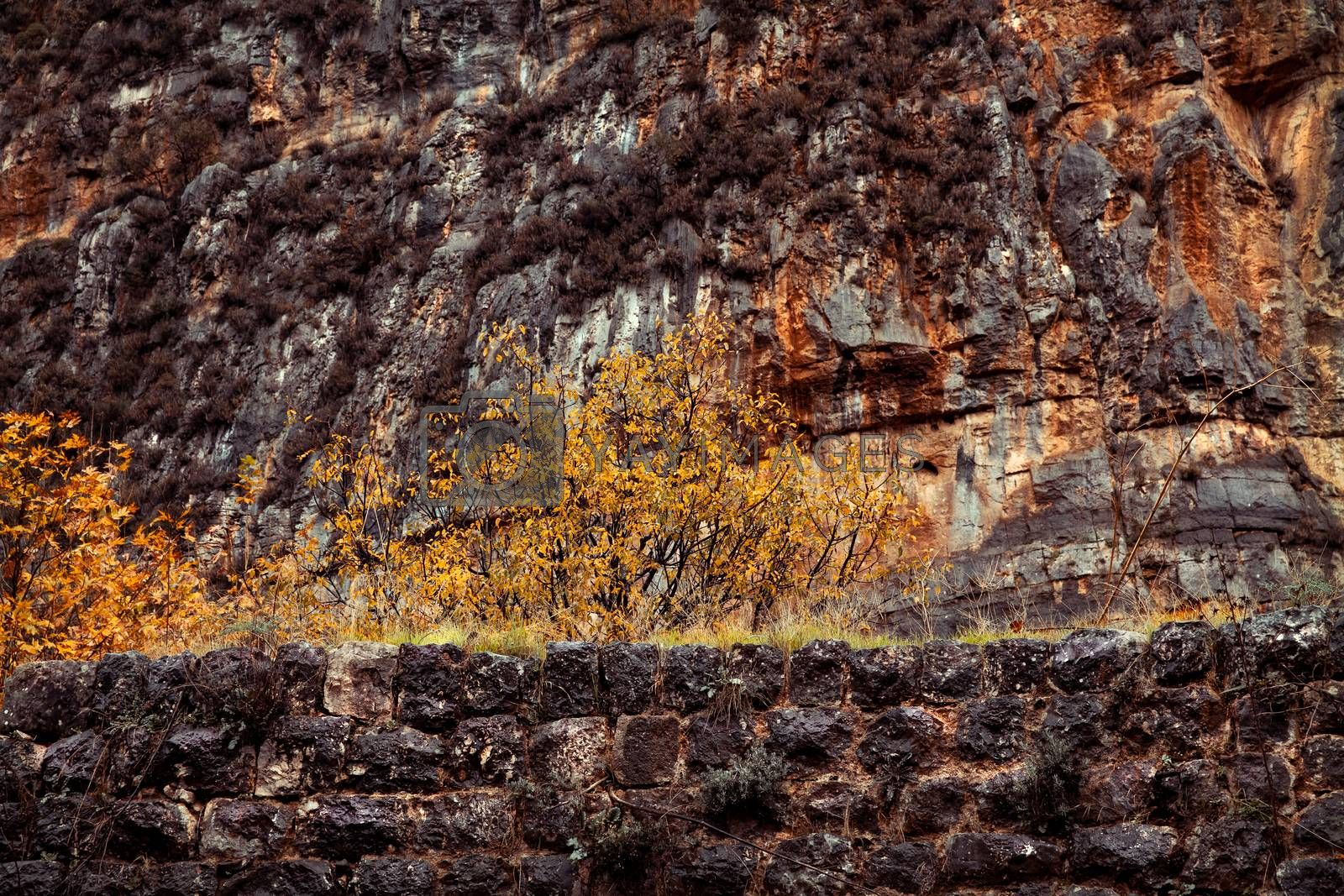 Mountain range covered with dry plants, abstract natural background, autumn season nature