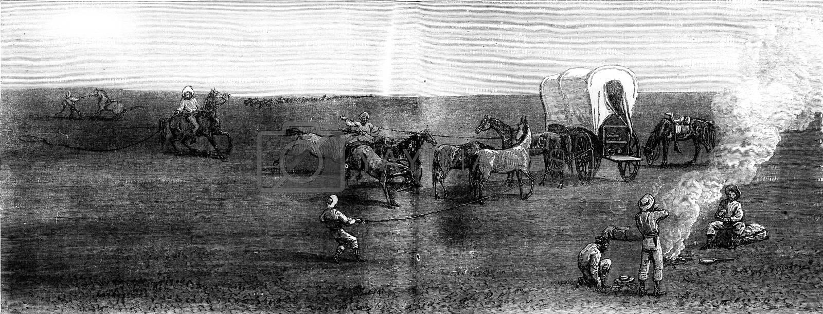 Herds in the distance. The entourage, vintage engraved illustration. Journal des Voyages, Travel Journal, (1879-80).