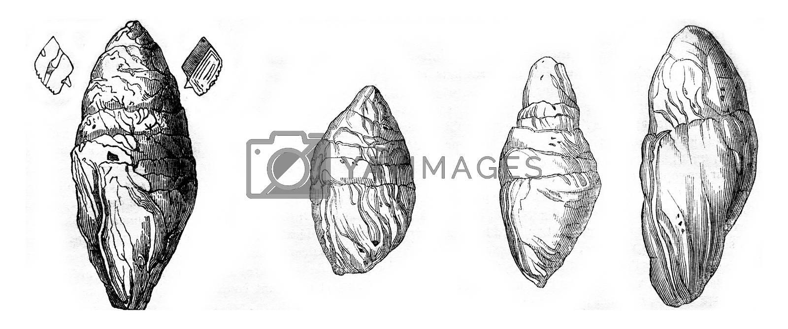 Coprolite the Lias at Lyme Regis, Other Coprolites Lyme, vintage engraved illustration. Magasin Pittoresque 1844.