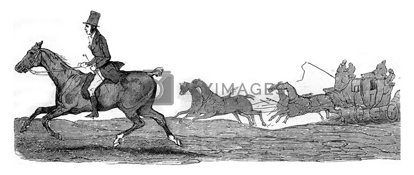 Kob, little horse half-blood who struggle with speed trunk Boston for thirty-three leagues, vintage engraved illustration. Magasin Pittoresque 1845.