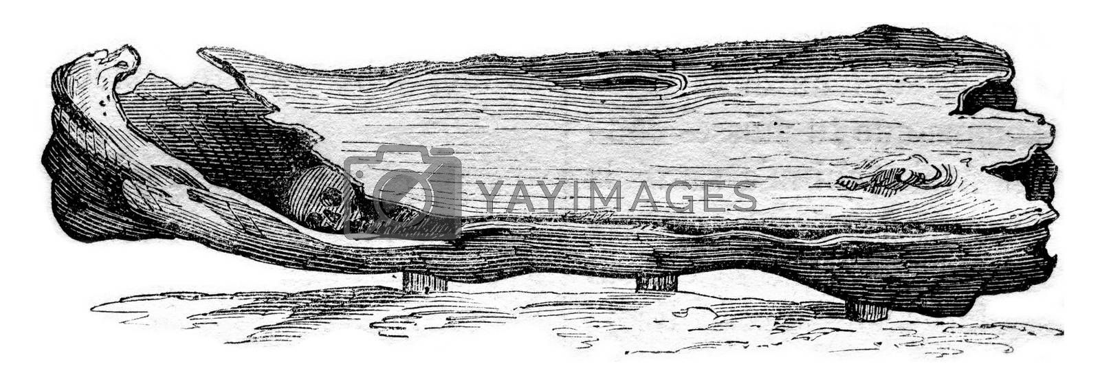 Anglo-Saxon coffin is Solby Yorkshire 1834-1857, vintage engraved illustration. Magasin Pittoresque 1861.