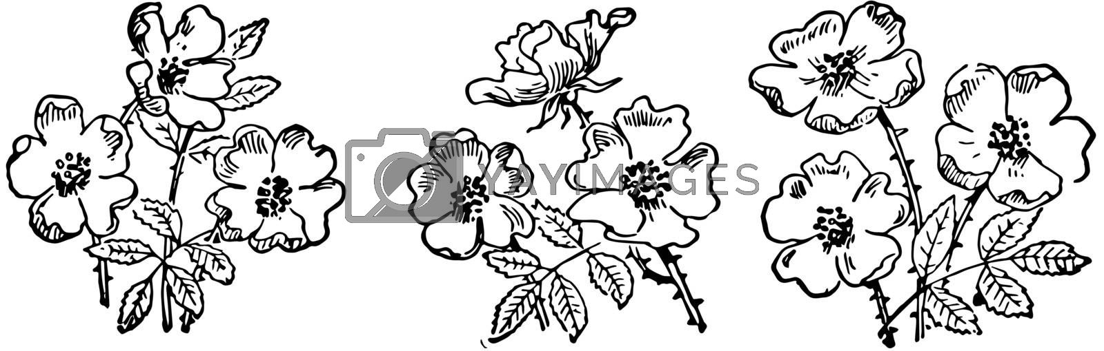 Nine Flowers, vintage illustration by Morphart