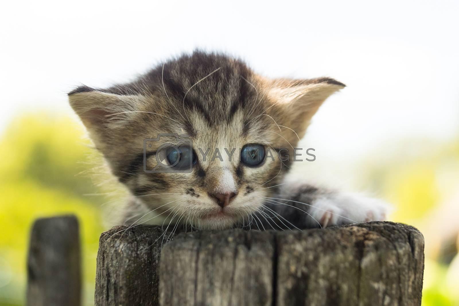 Portrait of a gray kitten on a fence