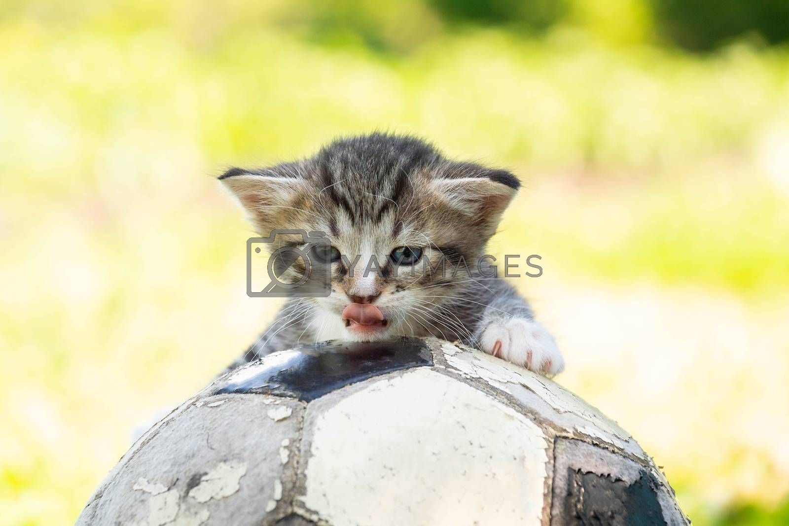Little kitten on an old football ball
