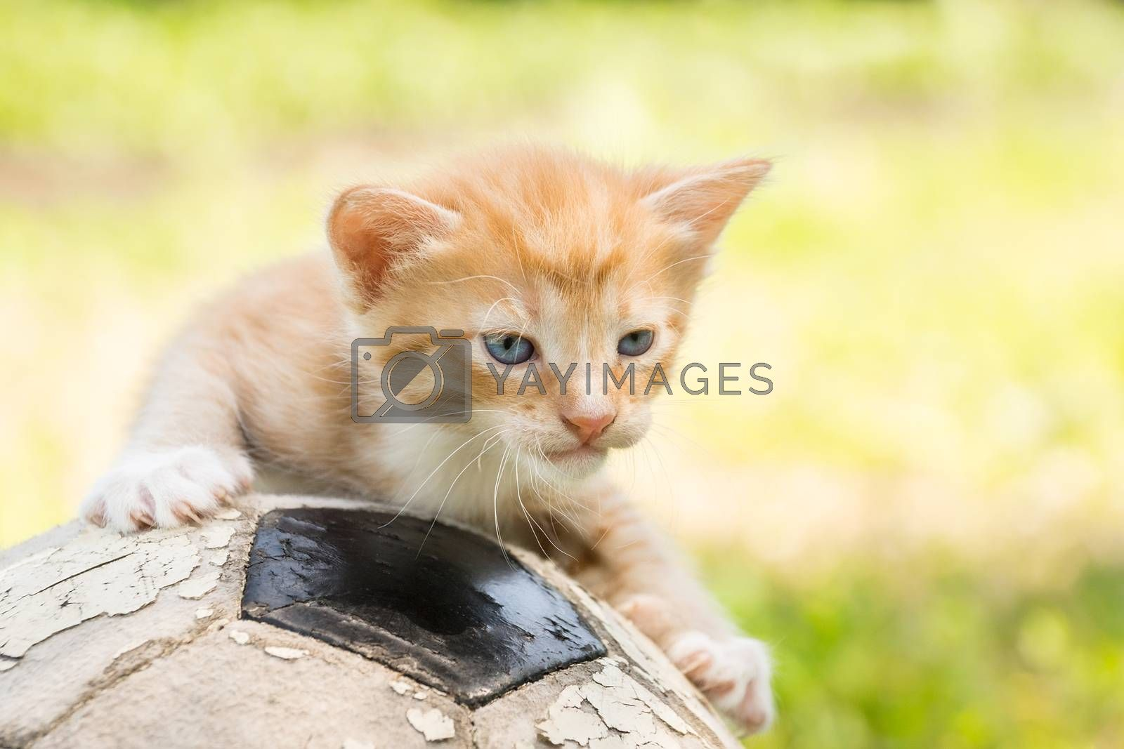 kitten with a soccer ball by AlexBush