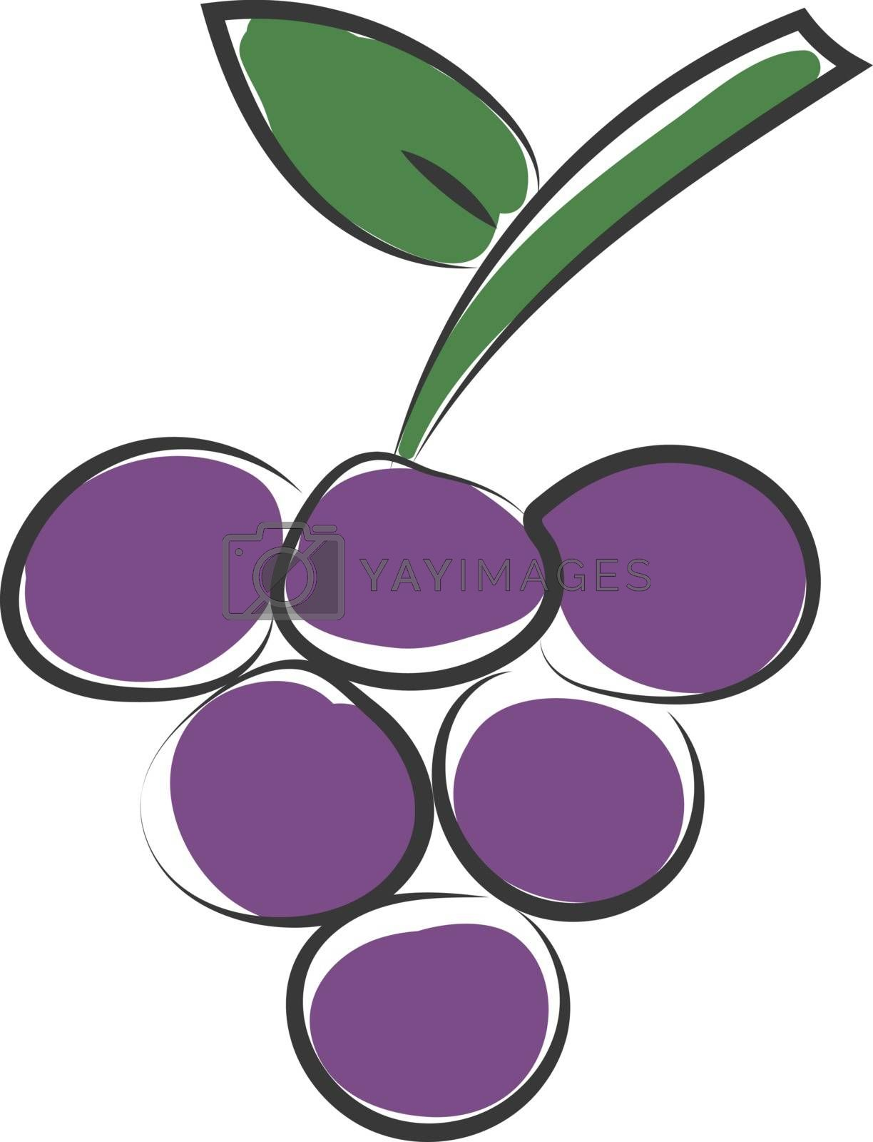 Royalty free image of Clipart of a bunch of round-shaped purple grapes vector or color by Morphart