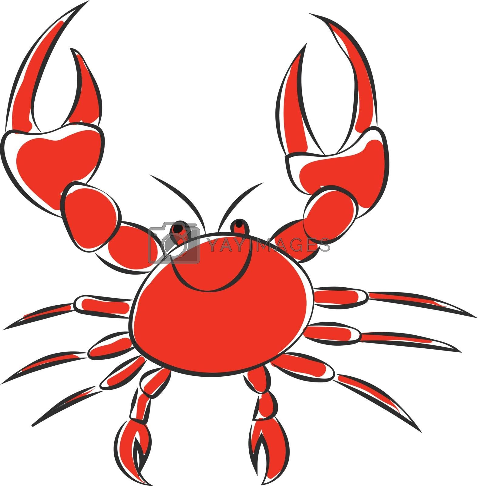 Royalty free image of Portrait of a red crab vector or color illustration by Morphart