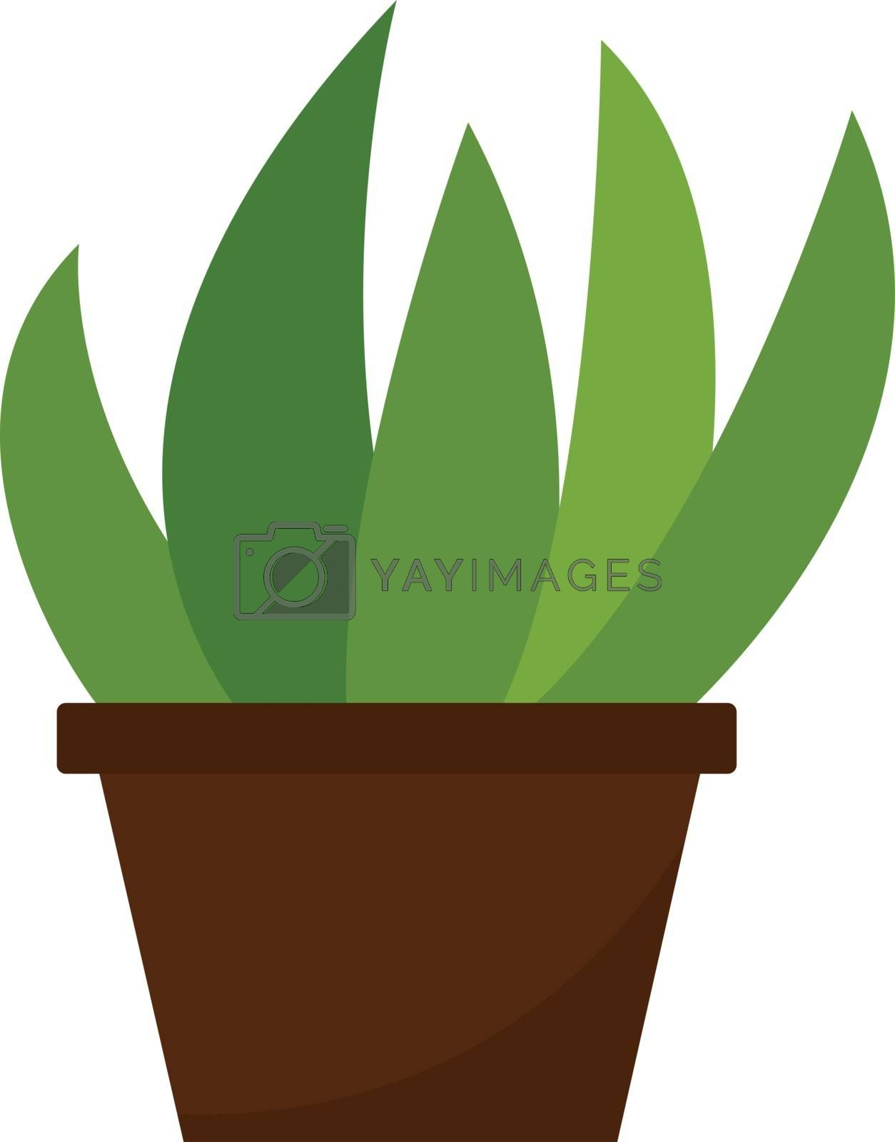 Royalty free image of Clipart of home plant growing in a brown pot vector or color ill by Morphart