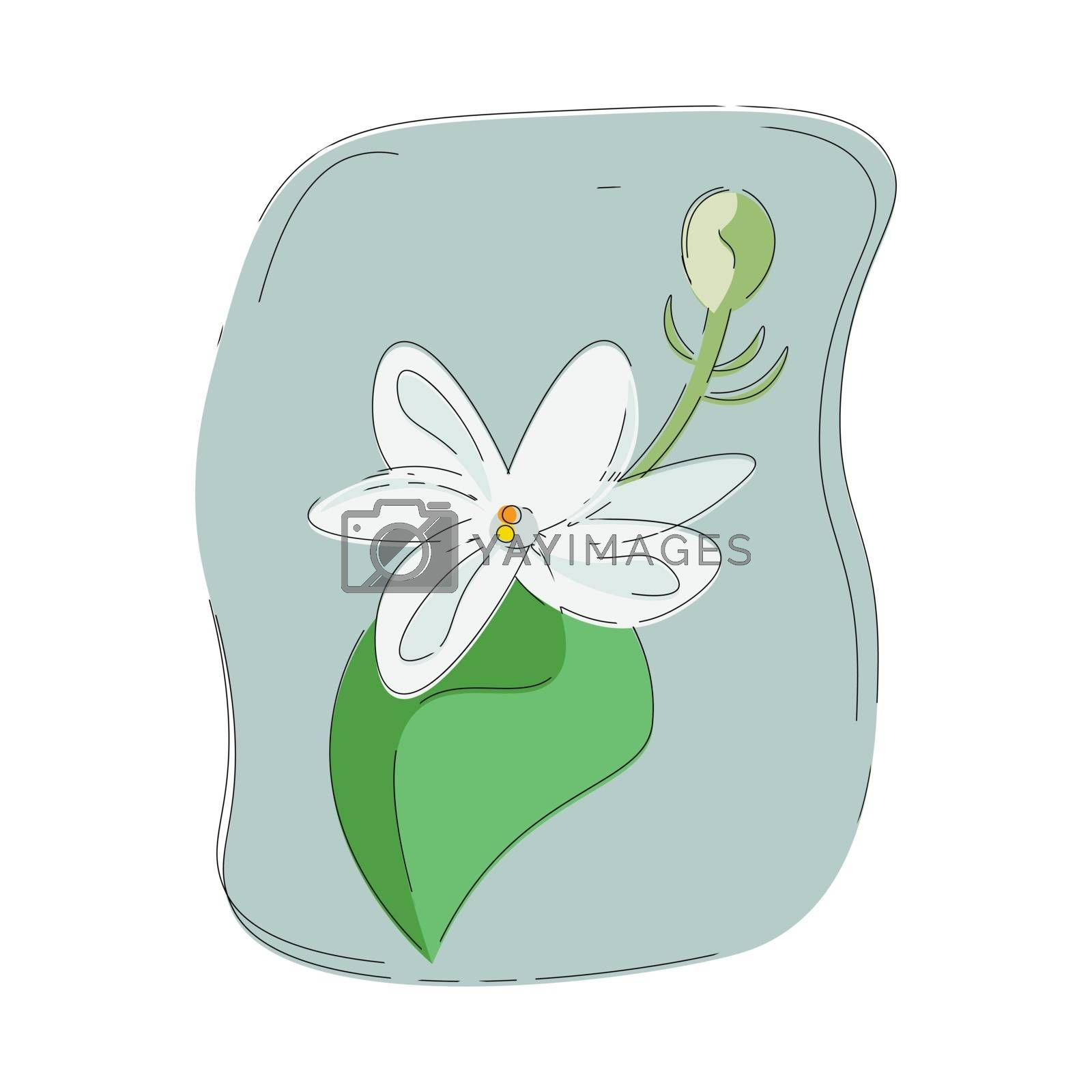 Royalty free image of Portrait of a fragrant white jasmine flower vector or color illu by Morphart