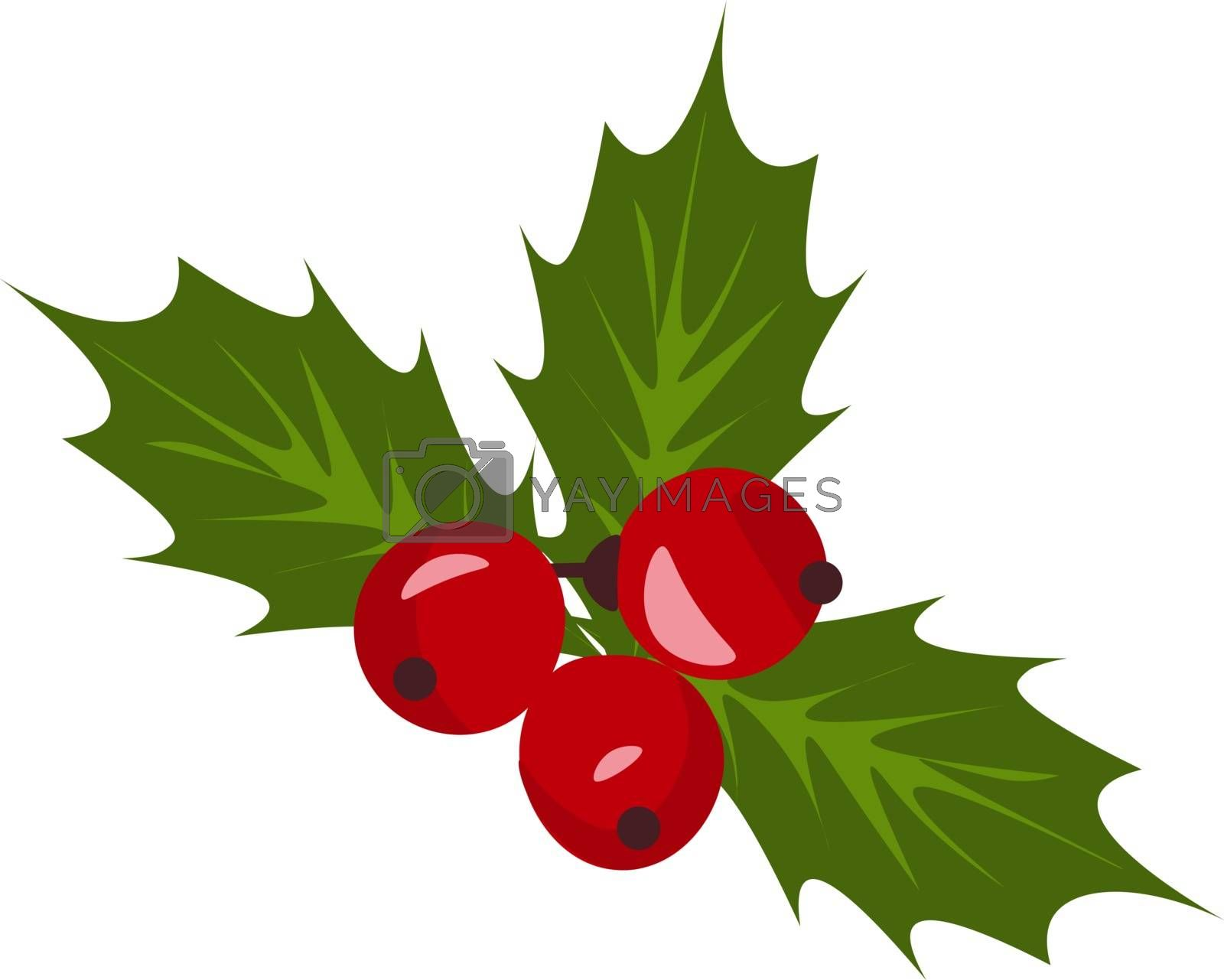 Royalty free image of Christmas holly berry mistletoe vector or color illustration by Morphart