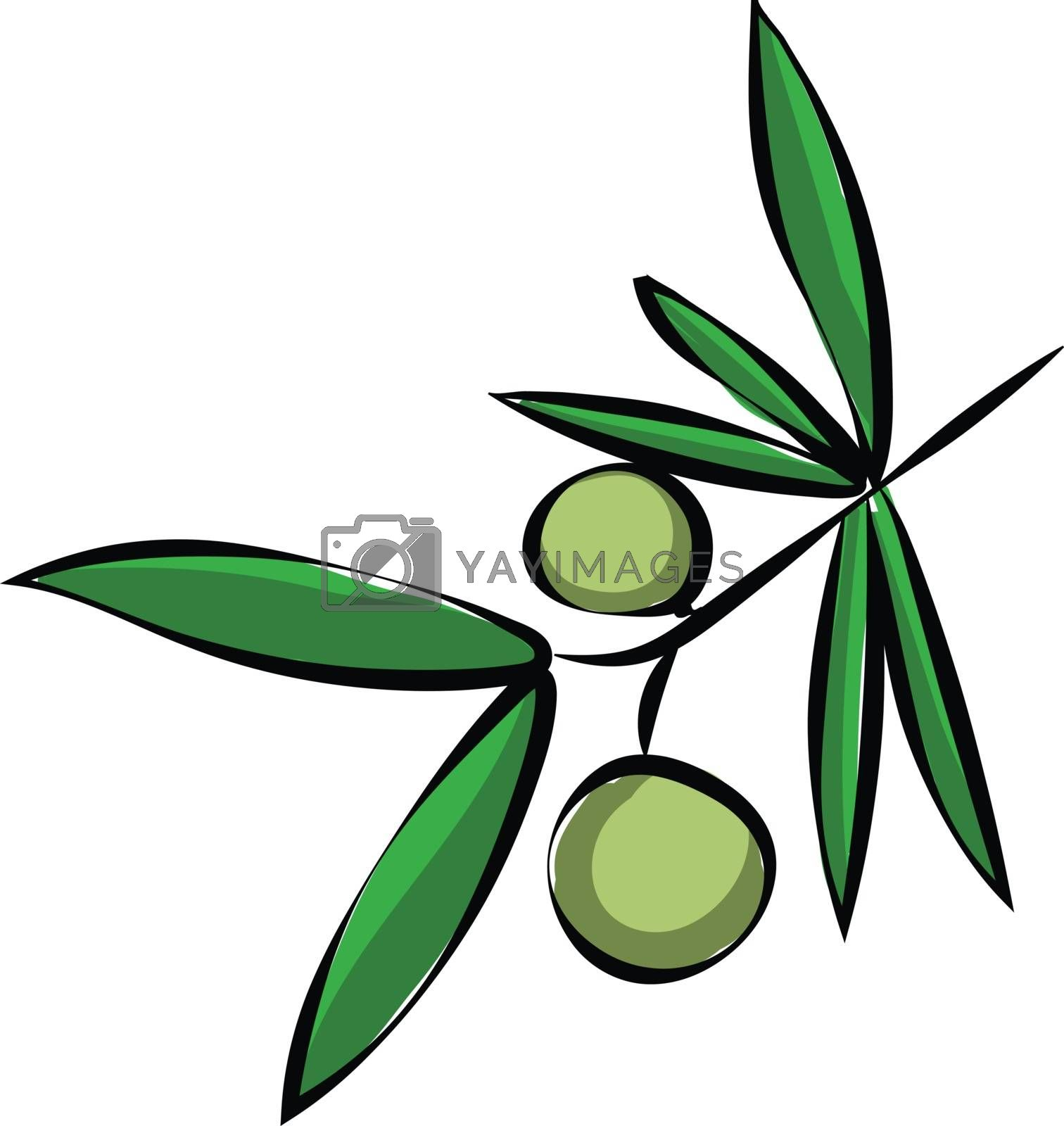 Royalty free image of Branch of an olive tree with two olives on it/Olive branch with  by Morphart