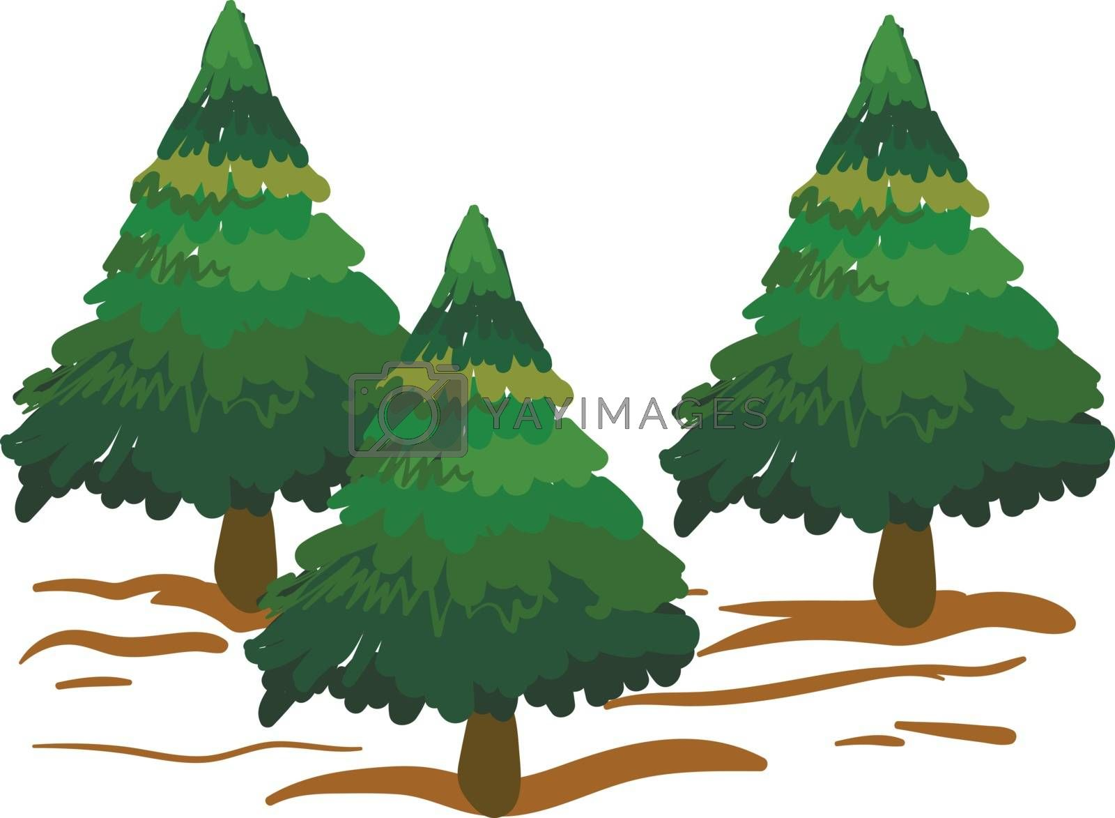 Royalty free image of Clipart of spruce trees/Xmas trees vector or color illustration by Morphart