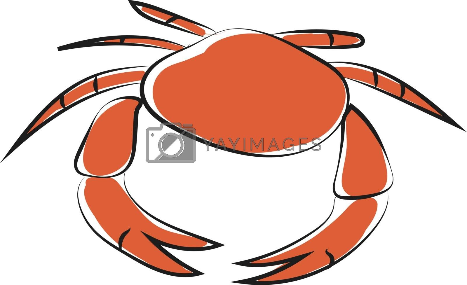 Royalty free image of Clipart of a round orange-colored crab vector or color illustrat by Morphart