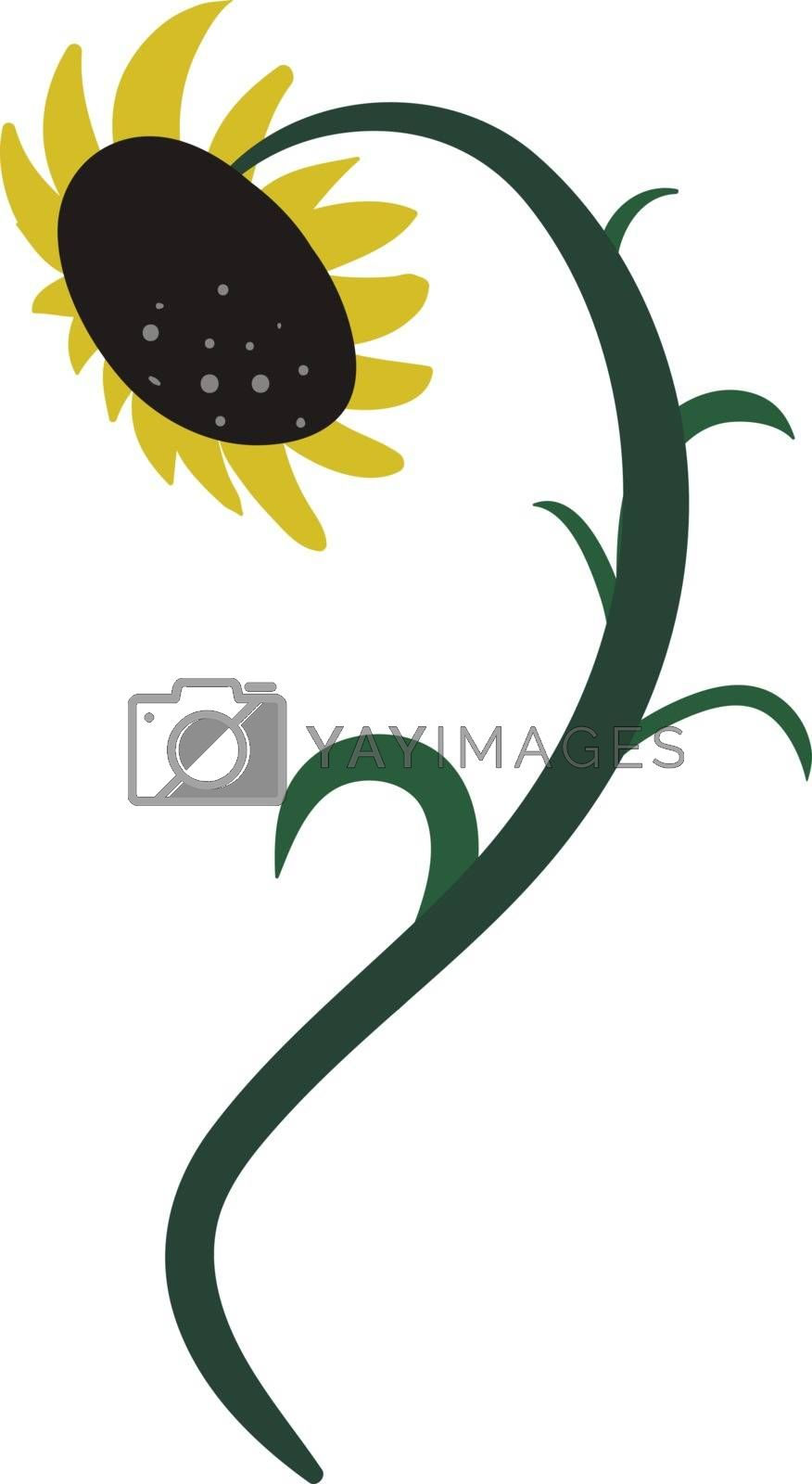 Royalty free image of Drawing of a sunflower vector or color illustration by Morphart