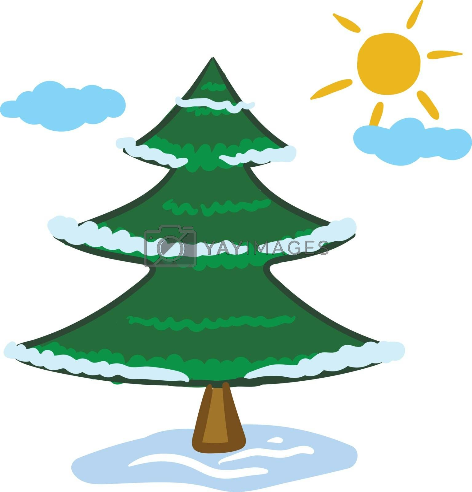 Clipart of a widespread coniferous green tree with a distinctive conical shape and hanging cones  reach high up the sky with few clouds and a rising sun  vector  color drawing or illustration
