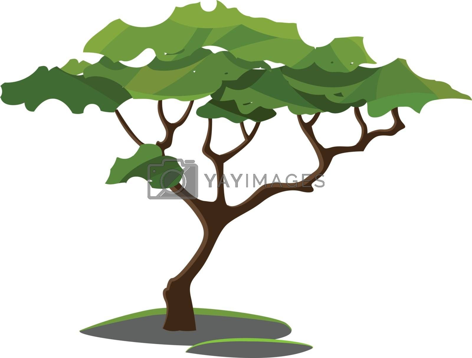 A tree with a single brown trunk and grown to a considerable height bears lateral branches with flat and wide leaves at some distance from the ground  vector  color drawing or illustration