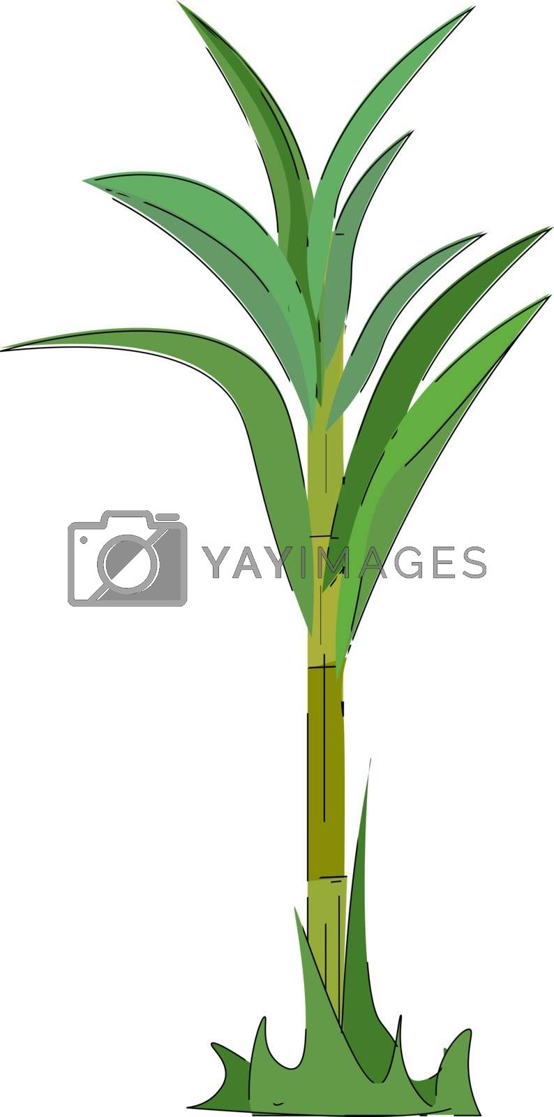 Royalty free image of A green-colored sugarcane plant vector or color illustration by Morphart