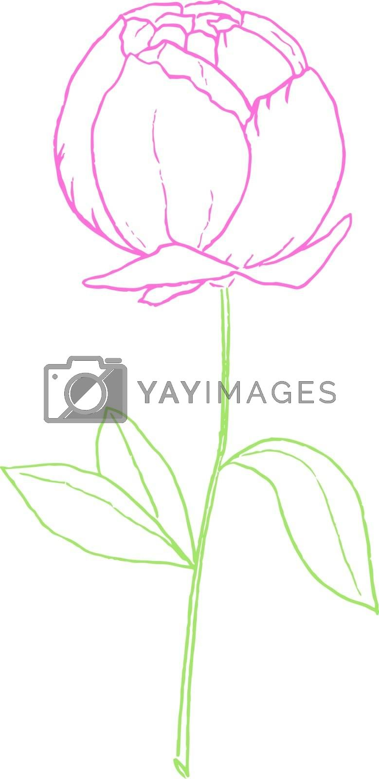 Royalty free image of Drawing of a purple-colored rose with green leaves vector or col by Morphart