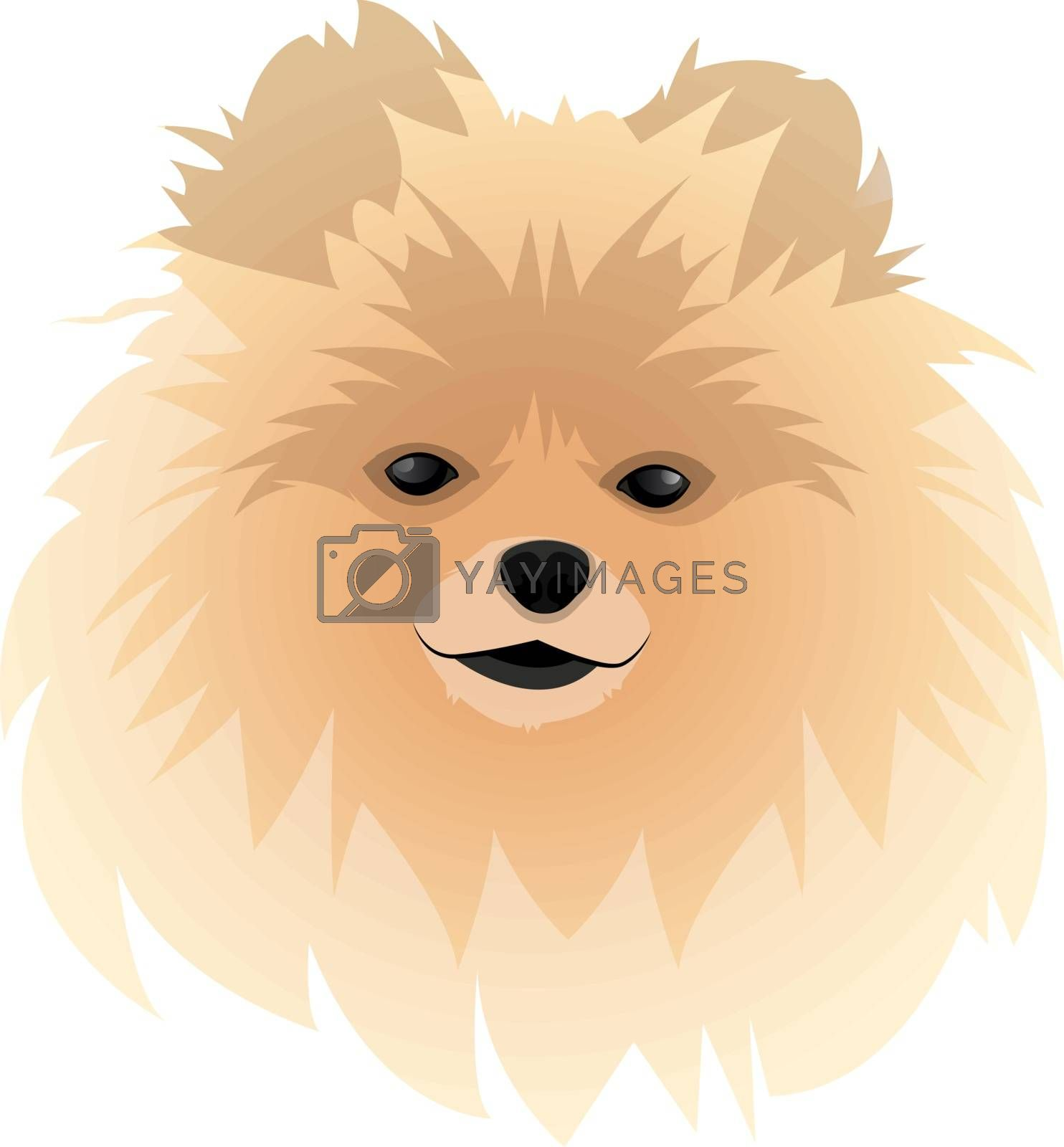 Royalty free image of Spitz illustration vector on white background by Morphart