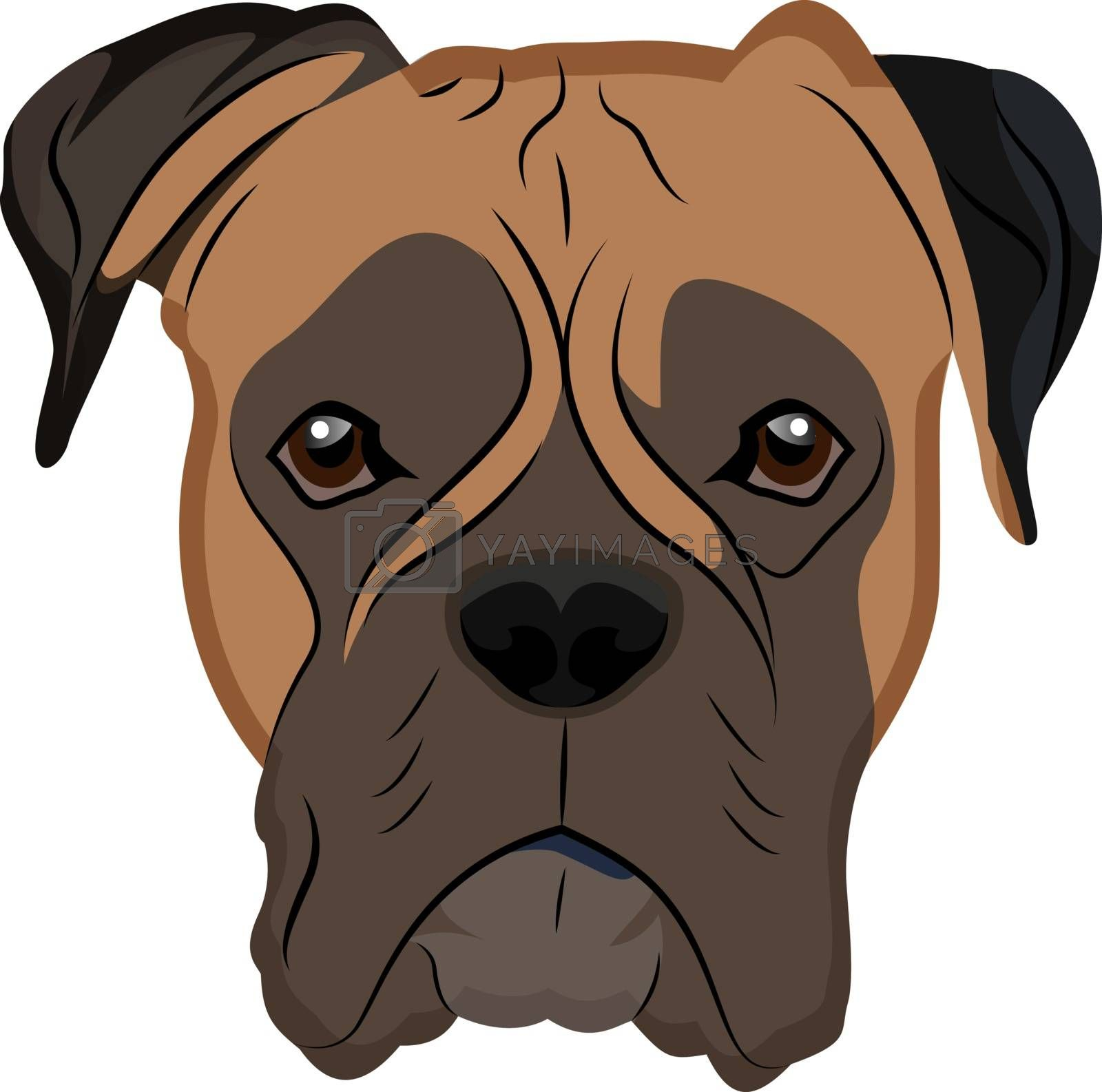 Royalty free image of Boxer illustration vector on white background by Morphart