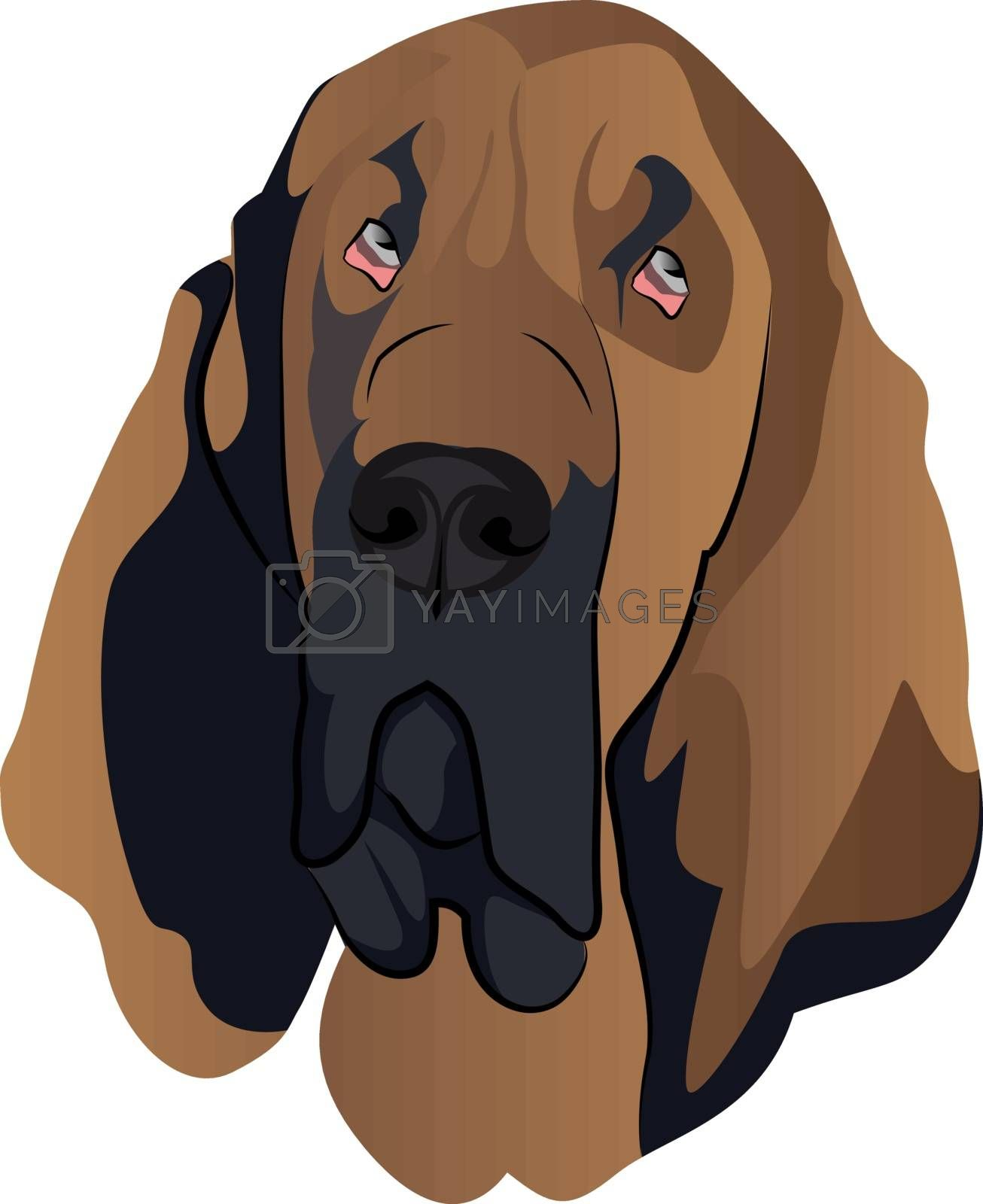 Royalty free image of Blood Hound illustration vector on white background by Morphart