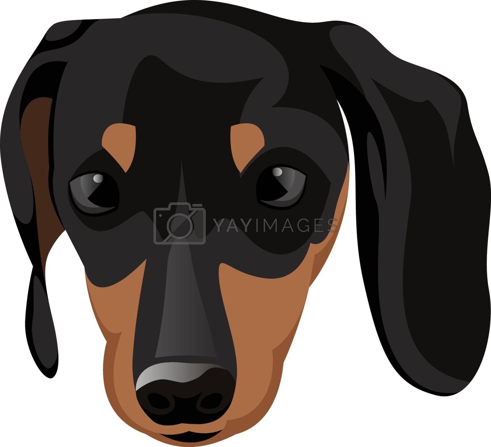 Royalty free image of Small Doberman illustration vector on white background by Morphart