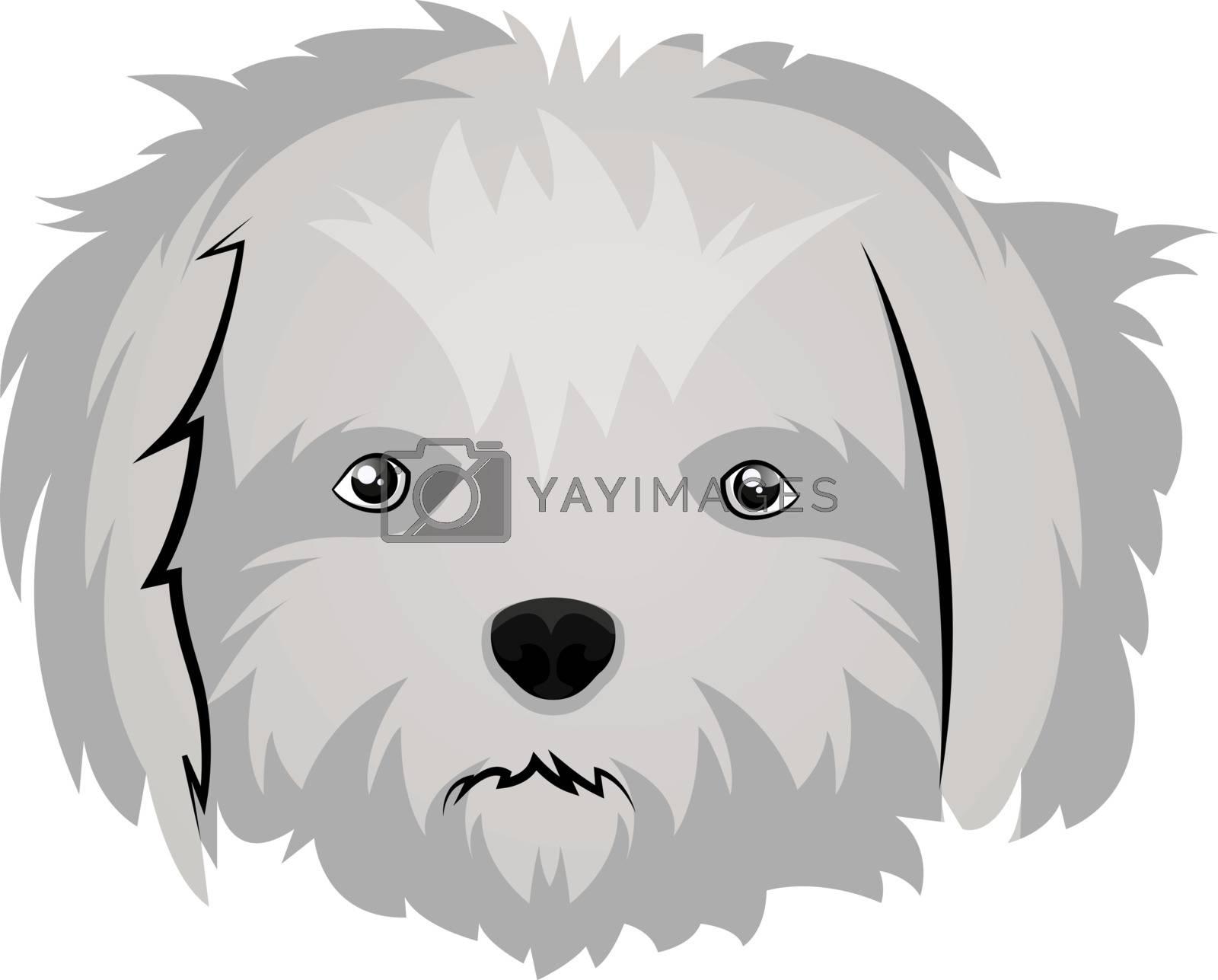 Royalty free image of Maltese illustration vector on white background by Morphart