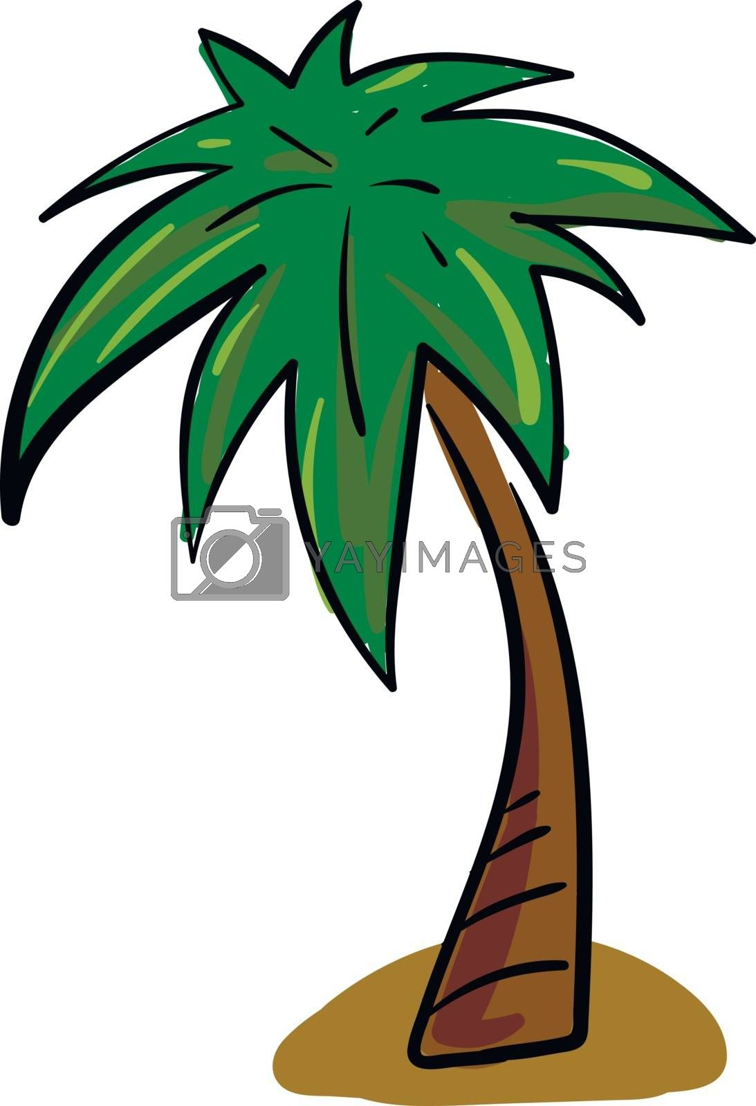 A palm tree having a crown of very long feathered or fan-shaped leaves above the land over a white background, vector, color drawing or illustration.