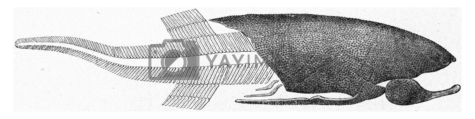 Reconstitution of a Devonian fish, vintage engraved illustration. From the Universe and Humanity, 1910.