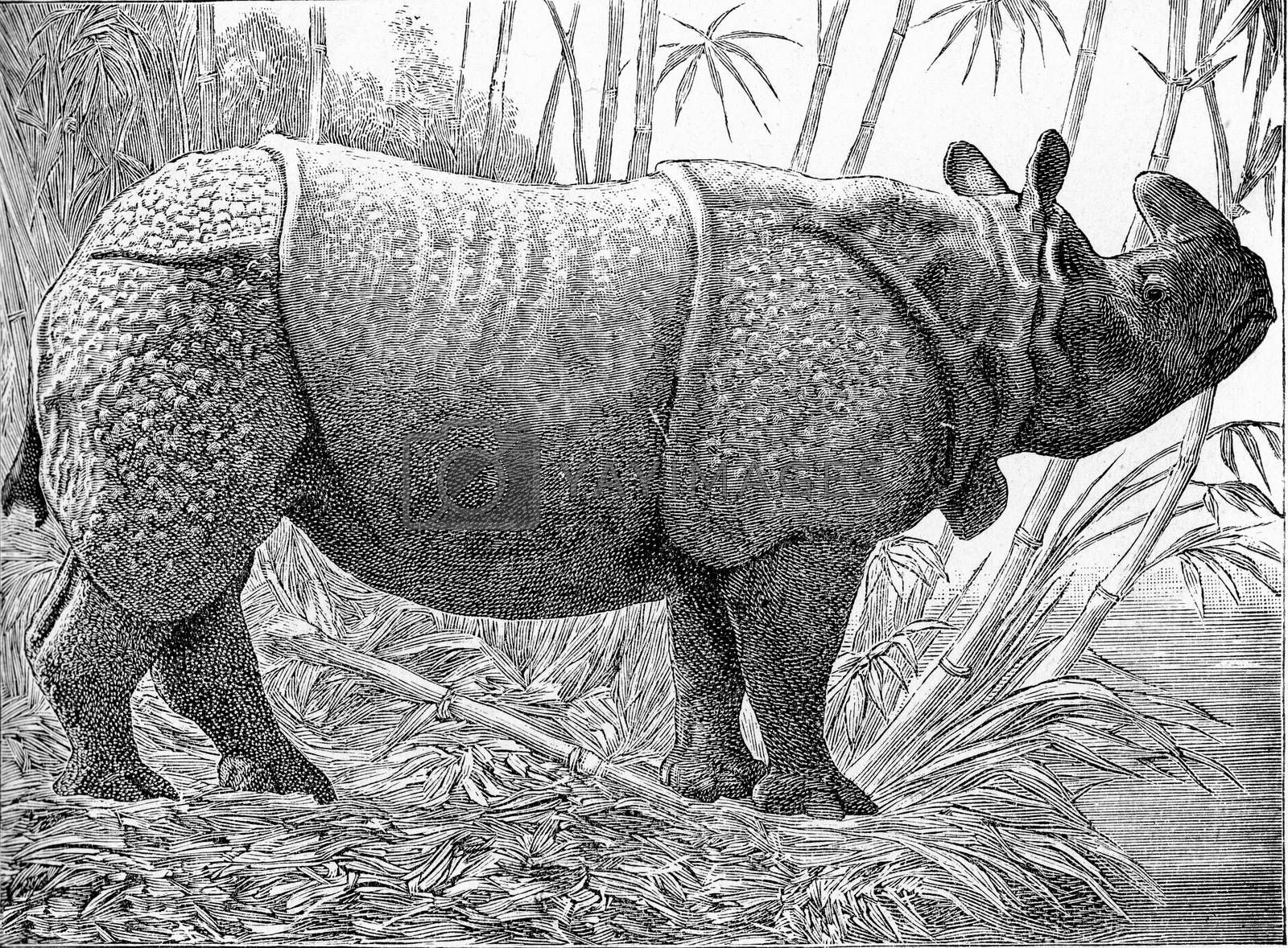 The one-horned rhino, vintage engraved illustration. From Deutch Vogel Teaching in Zoology.