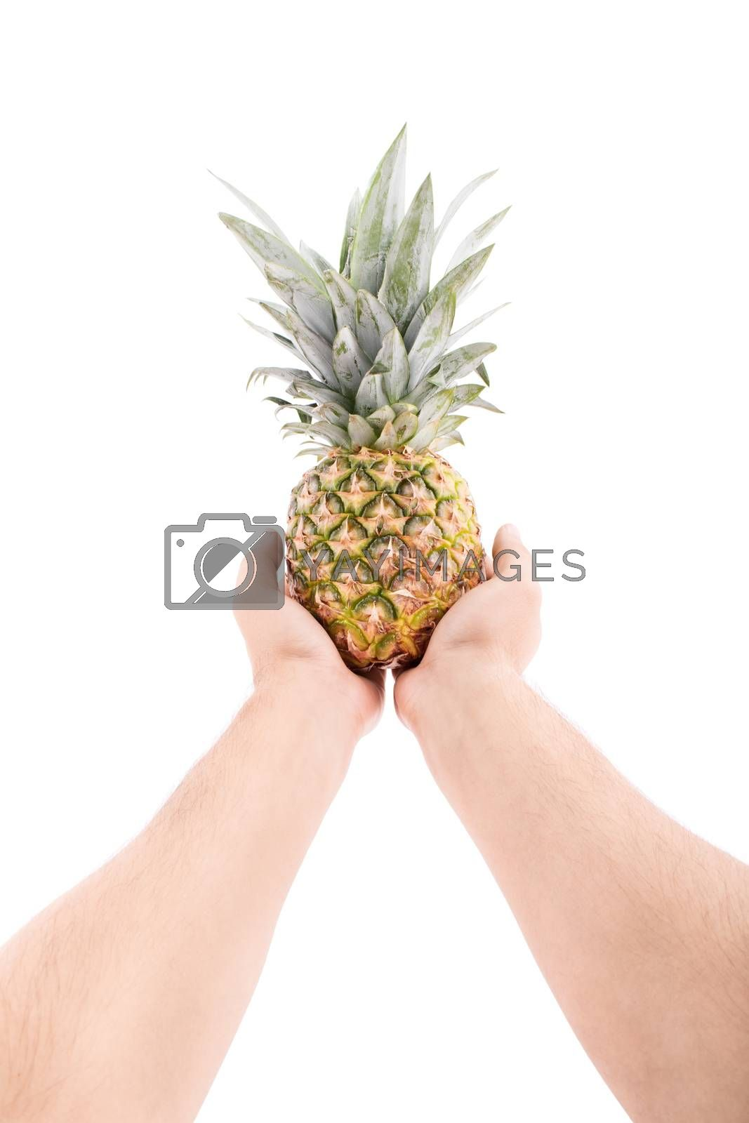 Stretched out male hands offering uncut pineapple, isolated on white background.