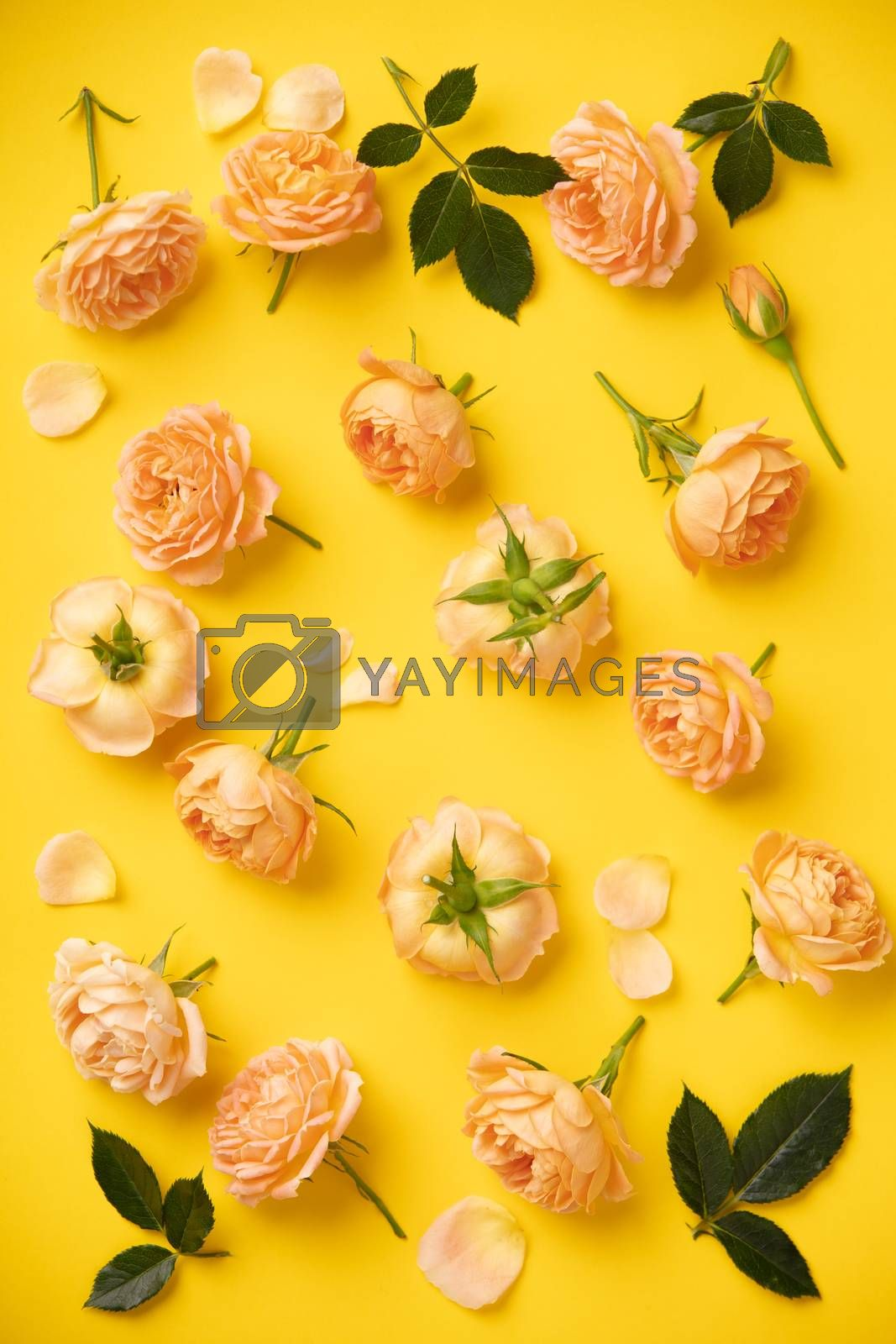 Floral pattern with pink roses and leaves on yellow background, flat lay