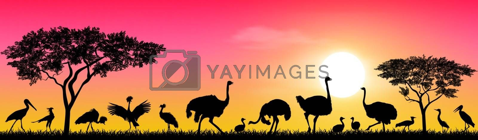 Wild birds of the African savannah against the sky and the sun. Silhouettes of different birds. Wildlife of Africa.