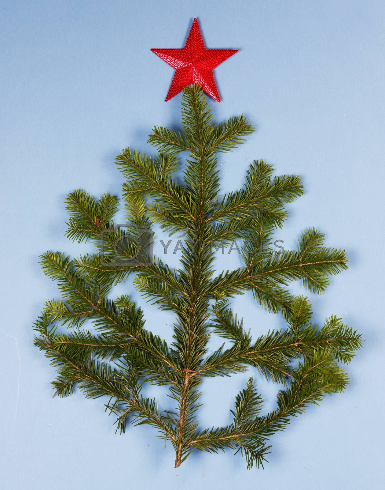 Christmas tree natural spruce branch and red star on blue background