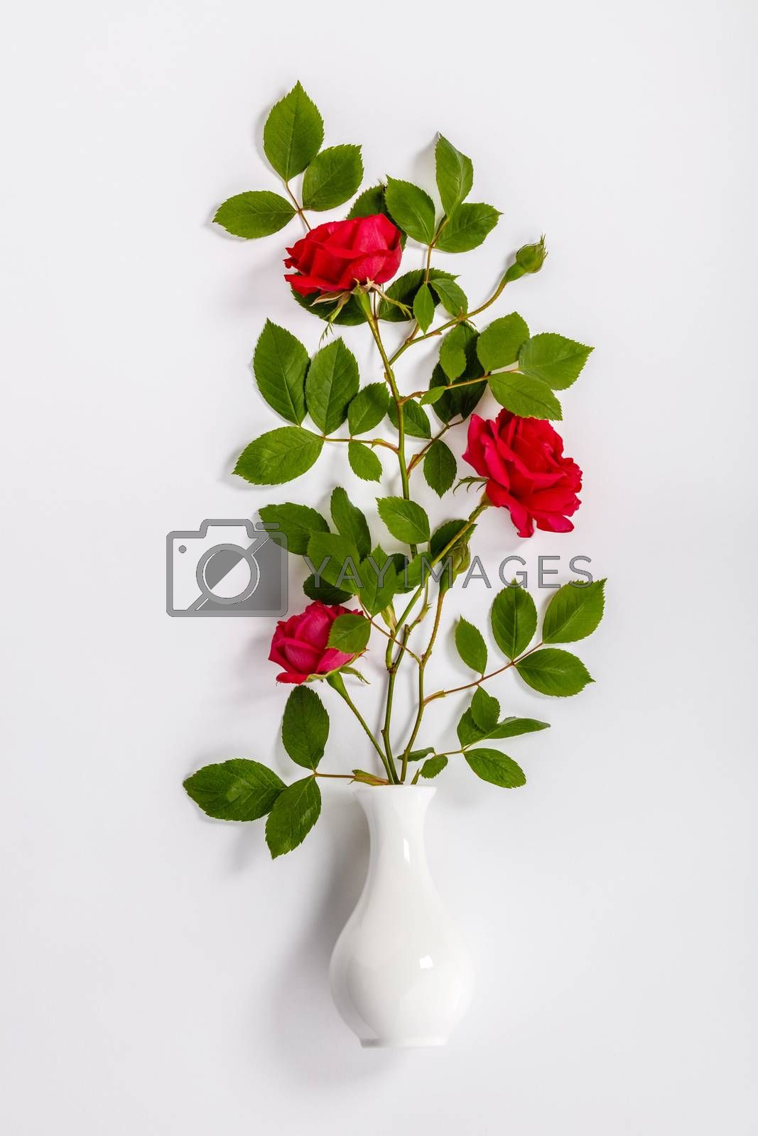 Flowers composition. Red roses and white vase on white background, flat lay