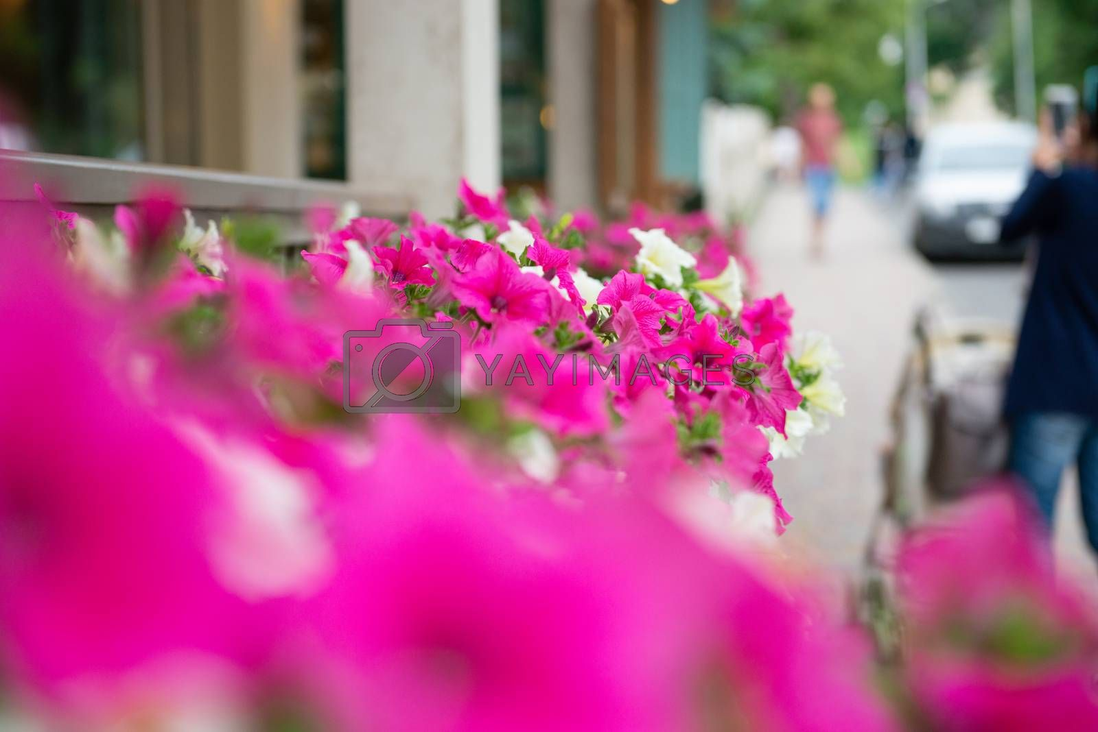 Garden flowers on street. Backdrop with copy space.