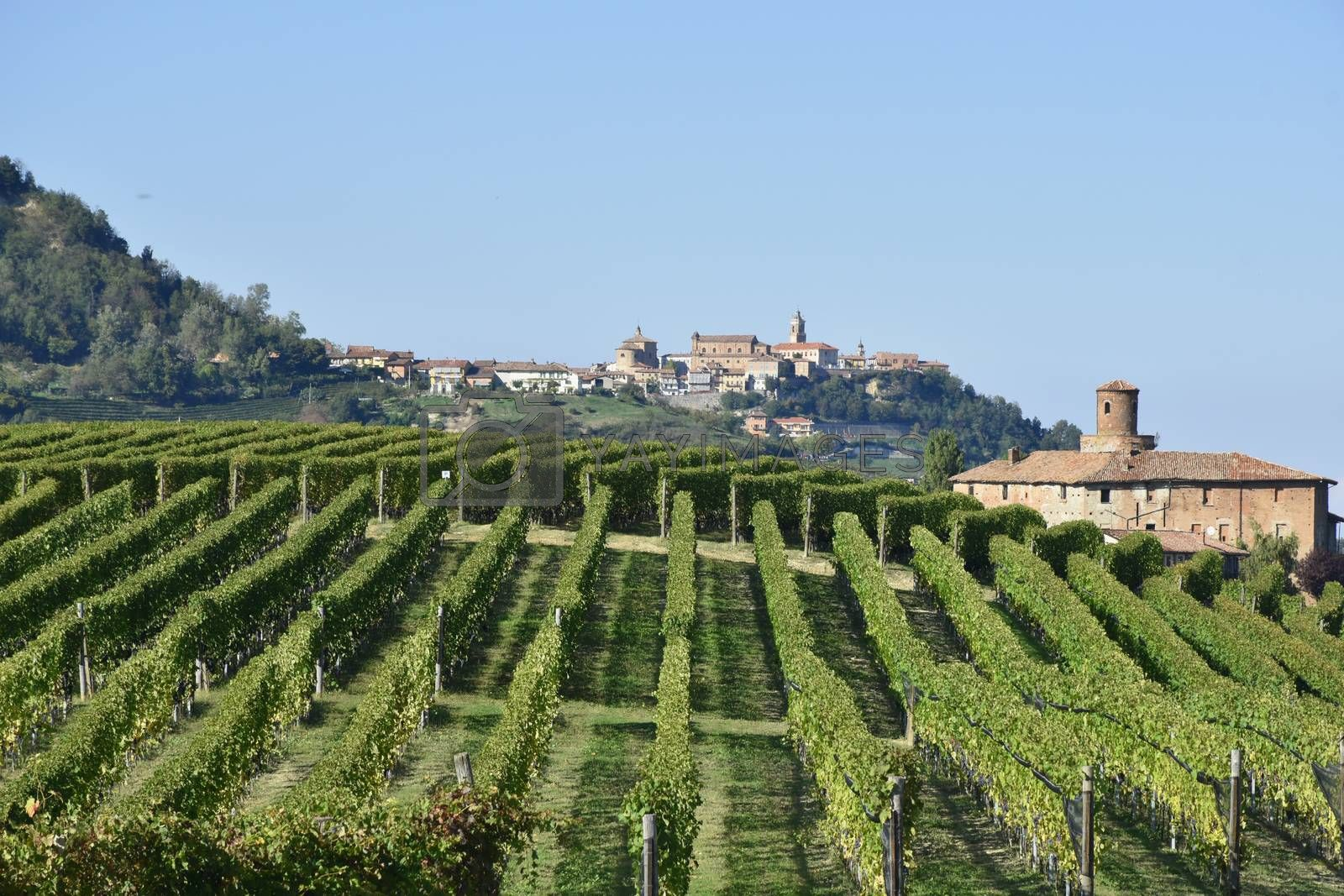 Langhe vineyards panorama, famous for Italian wine production in Piedmont