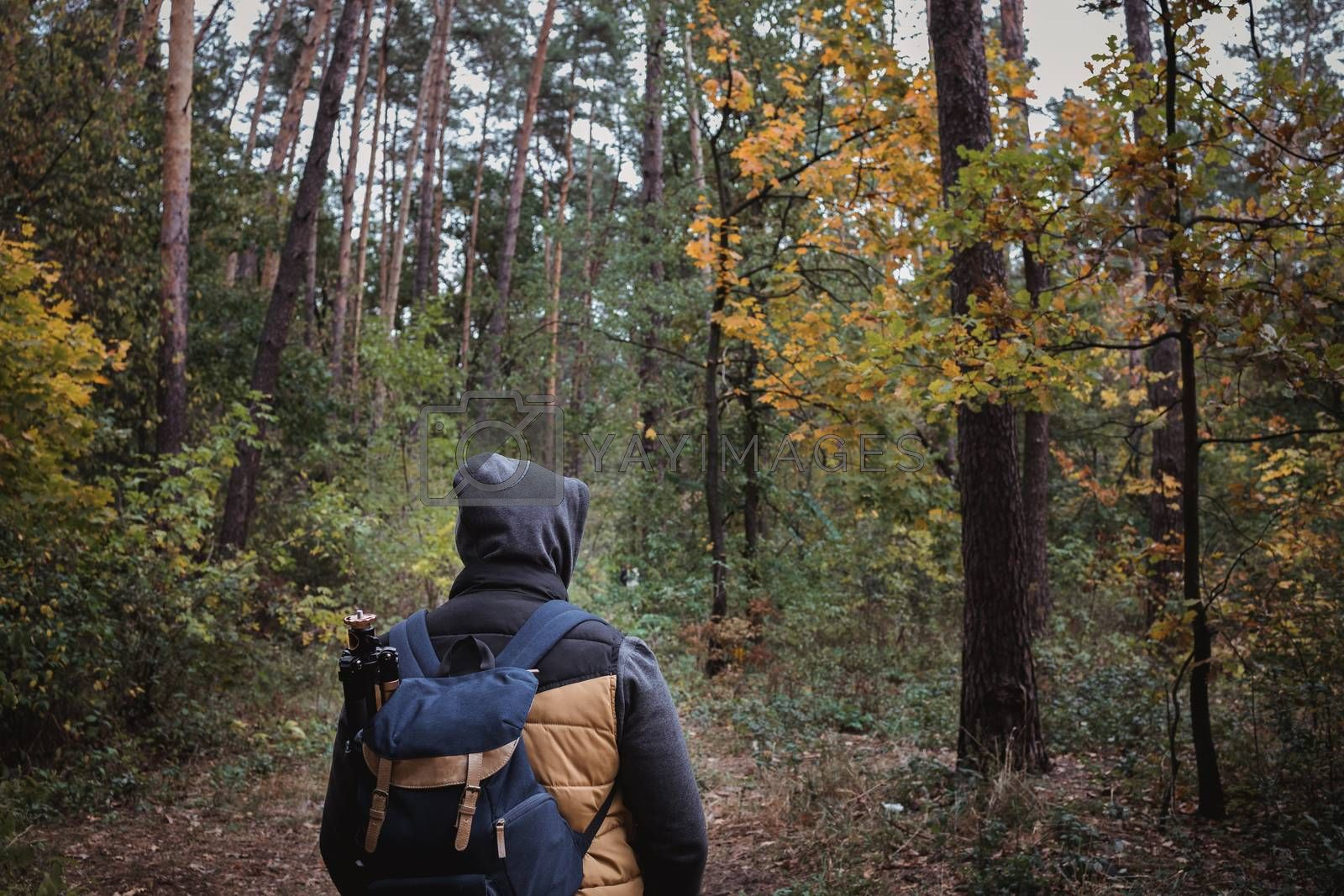 Royalty free image of A young guy with a backpack in the hat, traveler, hipster standing in the woods, Hiking, Forest,Journey.Copy space by Tanacha