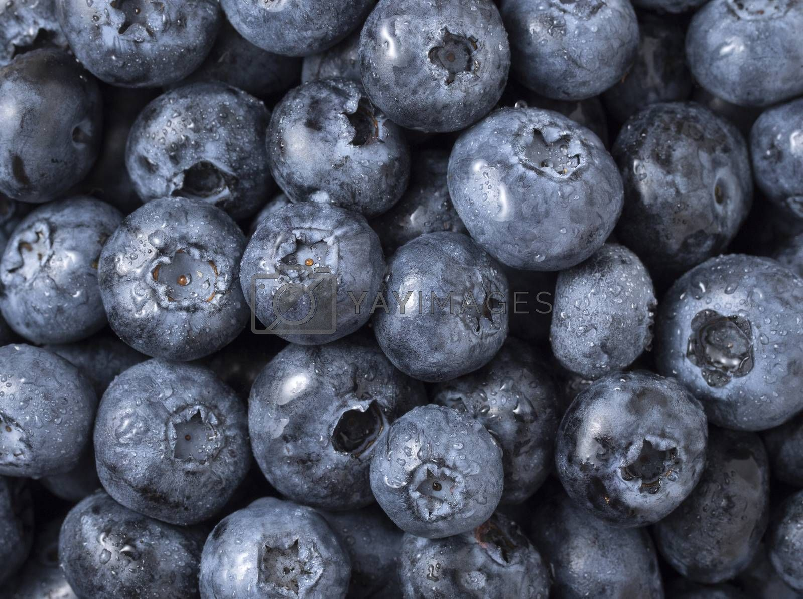 Royalty free image of Background of freshly picked blueberries. Top view, close up. by phortcach