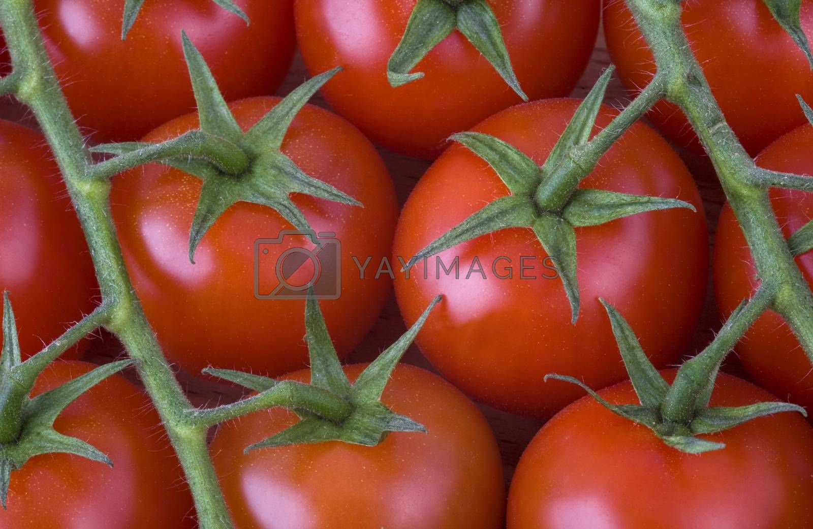 Royalty free image of red cherry tomatoes on the vine by phortcach