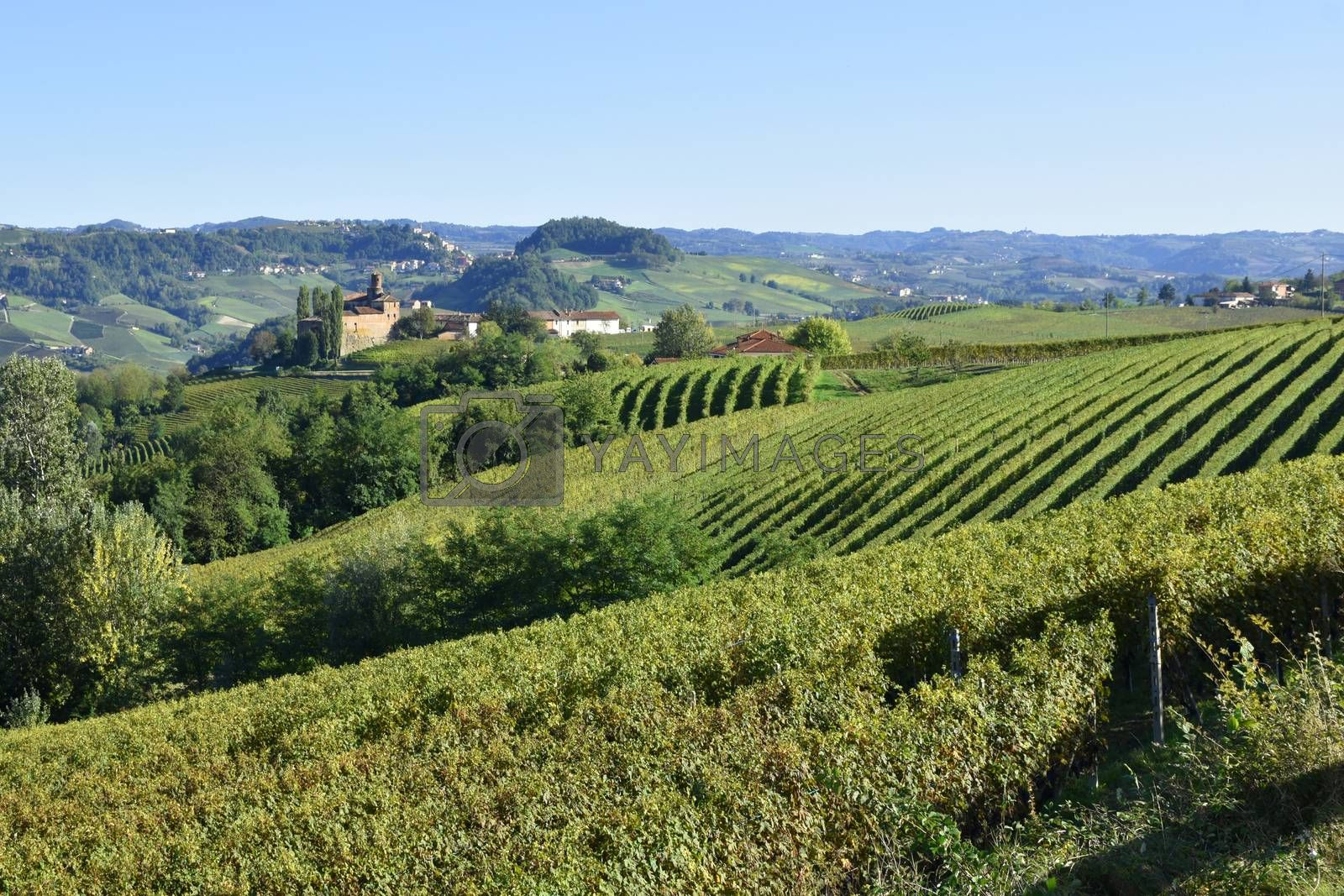 Langhe vineyards panorama; Langhe are famous for Italian wine production, in Piedmont.