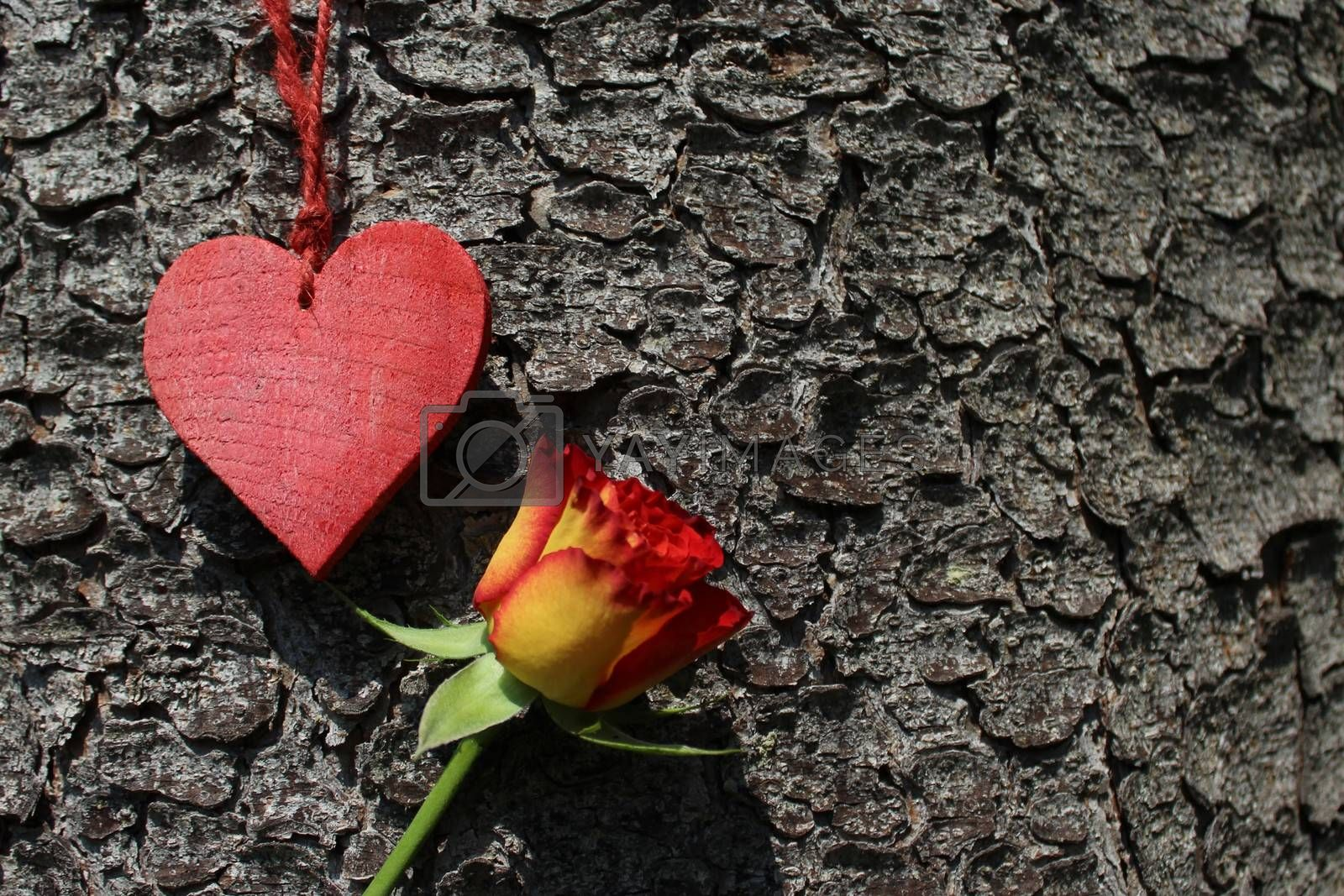Royalty free image of a red heart and a rose by martina_unbehauen