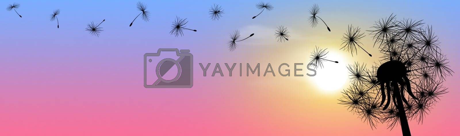 Royalty free image of Fluffy dandelion sun sunset sky banner by liolle