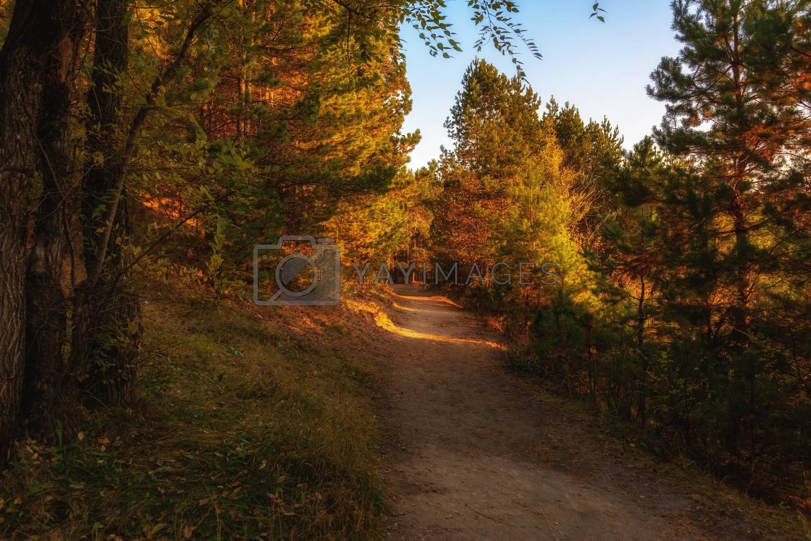 Royalty free image of Early morning in the forest by VladimirZubkov