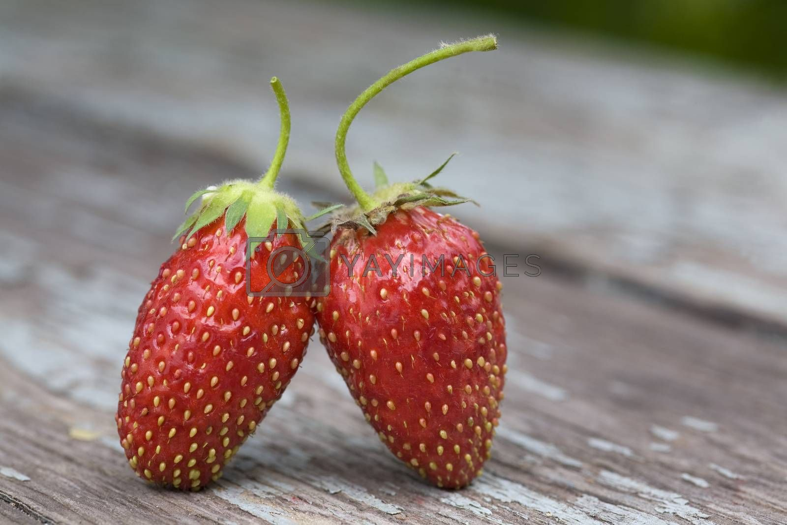 Royalty free image of two strawberries by phortcach