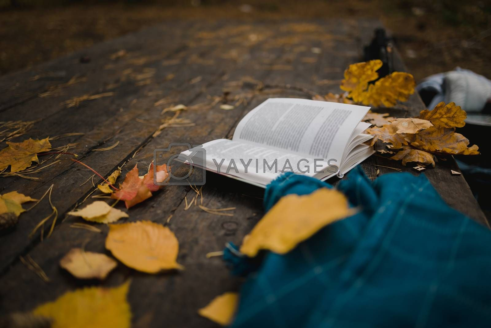 Royalty free image of On an old wooden table in an autumn park lies an open book, a blue plaid, a garland with lights, a cup of yellow leaves and sos cones. Top view, in blur. Autumn warm dark mood, soft focus. by Tanacha