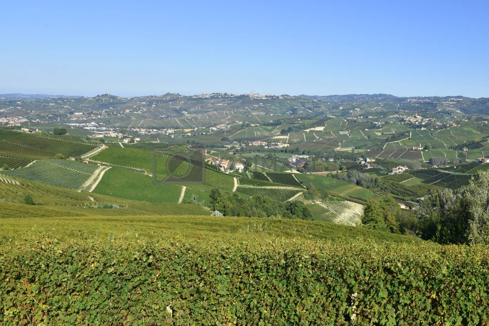 Langhe are famous for Italian wine production, in Piedmont.