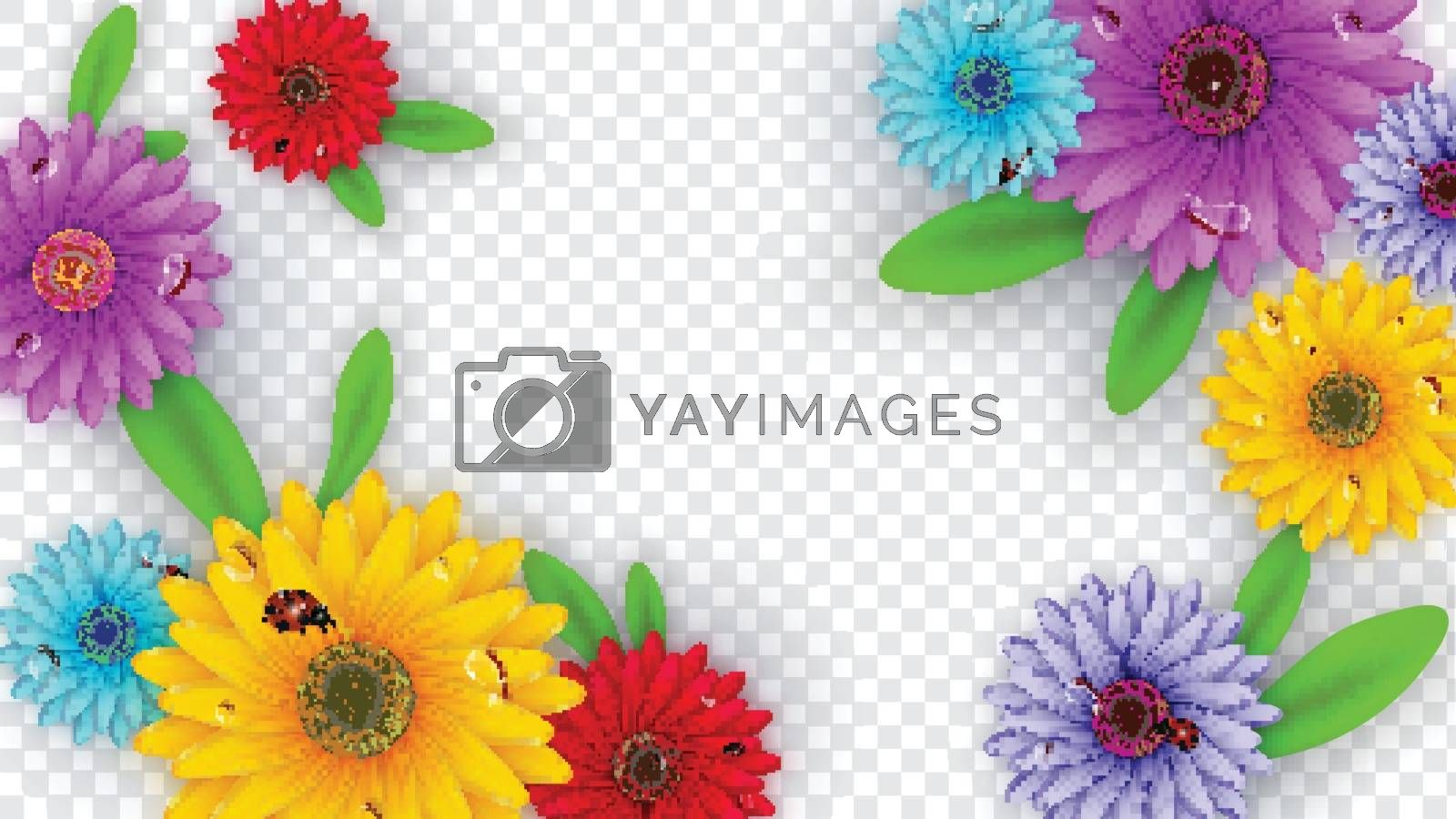 Royalty free image of Colorful gerbera flowers decorated on transparent background for by aispl