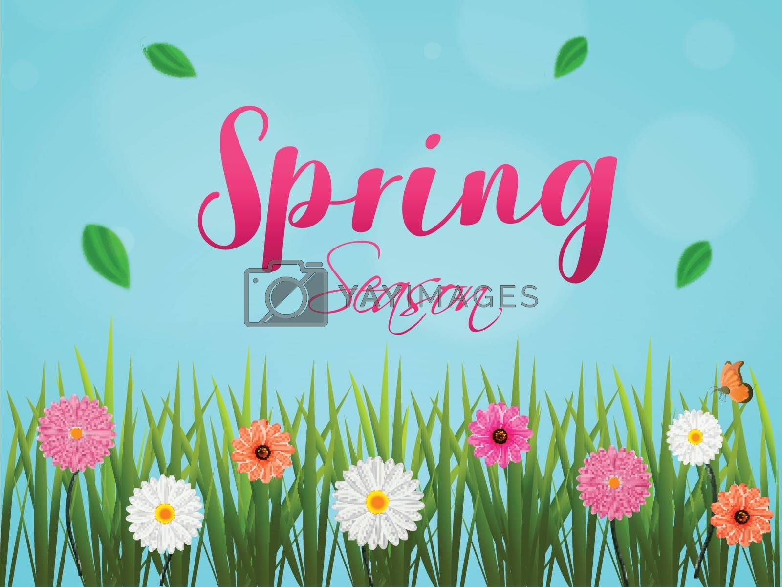 Spring Season celebration greeting card or poster design decorated with colorful daisy flowers on shiny blue background.