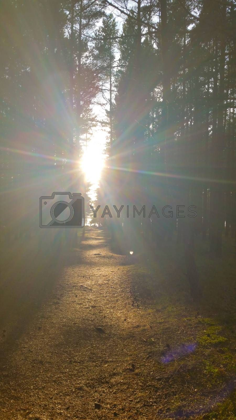 Rays of the sun on a forest path, shine directly into the eyes.